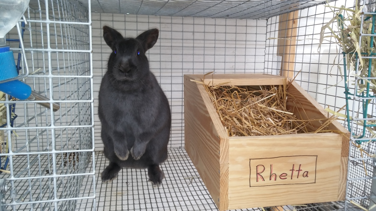 Question of the day: Is this rabbit pregnant??