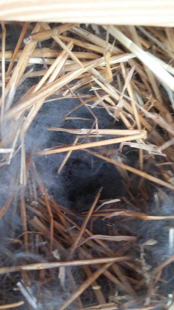 Rhetta's nest.