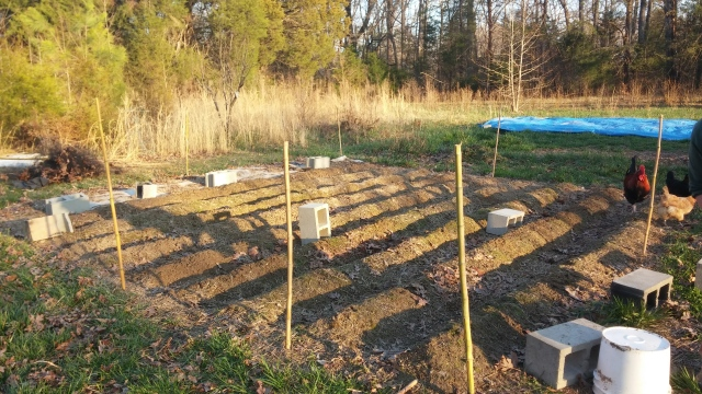 Garden bed, with bamboo support posts.