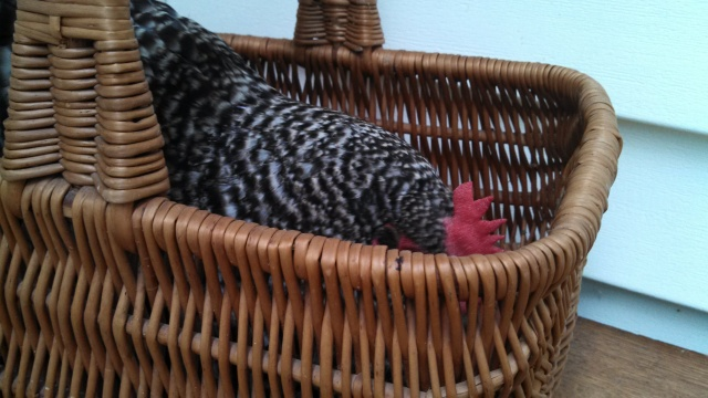 """They won't GET me a featherbed, but this basket is pretty nice!"""